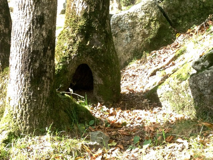 casa_bosco
